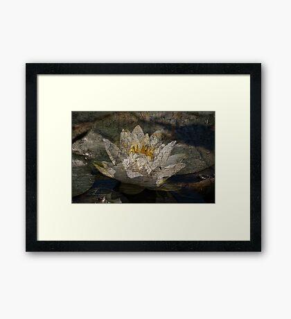 Textured Pond Lily Framed Print