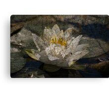 Textured Pond Lily Canvas Print