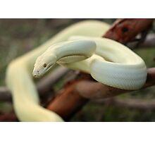 Albino Olive Photographic Print