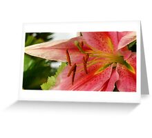Pink Asian Tiger Lily Greeting Card