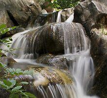 Crouching Garden, Hidden Water by Milton Gan
