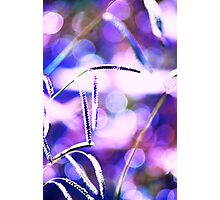 Purple Weedy Things Photographic Print