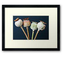 Poppy seed pods Framed Print