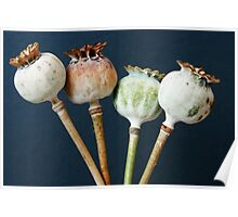 Poppy seed pods Poster