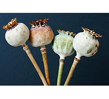 Poppy seed pods Photographic Print