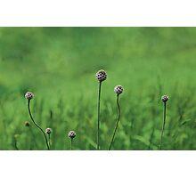 Green garden Photographic Print