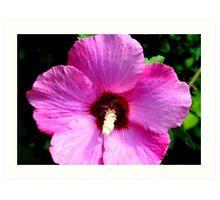 Perennial Hibiscus in PInk Art Print