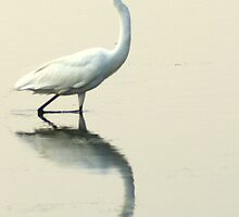 Reflections on a Great Egret by Laurel Talabere