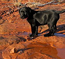 20 Pounds of Pup Trouble by Dennis Jones - CameraView
