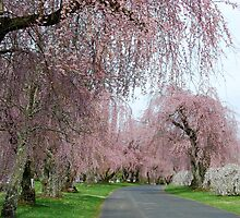 Weeping Cherry by linda lowry