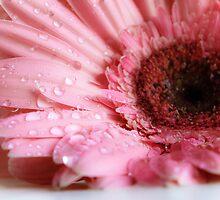 Pink & Dreamy by CarrieNovak