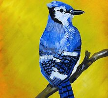 Blue Jay by Louise Coburn
