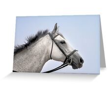 Appaloosas - The best all-around using horses Greeting Card