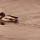 Like A Duck To Water by SeanDalby