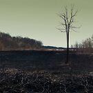 Aftermath by Jeniella Goci