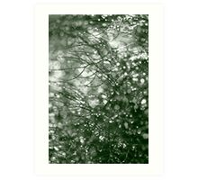 Raindrops on fennel foliage Art Print