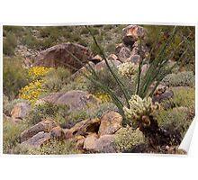 Sonoran Textures Poster