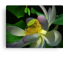 White Orchid on Black Canvas Print