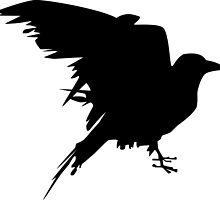 graphic raven by querom