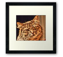 Cat That Have The Look Of Love  Framed Print
