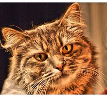 Cat That Have The Look Of Love  Photographic Print