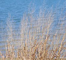 Tall grass against blue sky by marycloch
