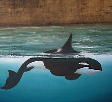 Orca at Bridgewater  by Viona Pfeiffer