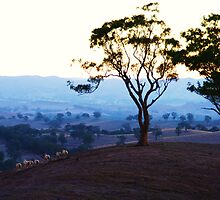 Our sunburnt country... by Alicia  Liliana