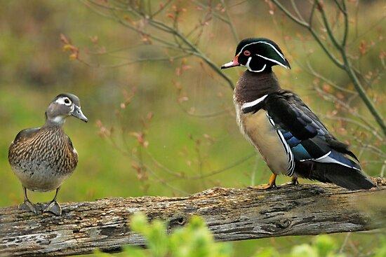 I Do NOT Walk Like a Duck! by Kenneth Haley