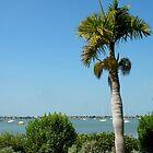 Harbor View by Rosalie Scanlon
