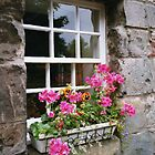 IN MCDUFF BANFFSHIRE SCOTLAND by DIANEPEAREN