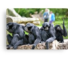 Siamang Gibbon family relaxing in fota wildlife park Canvas Print