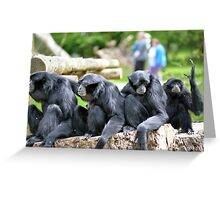 Siamang Gibbon family relaxing in fota wildlife park Greeting Card