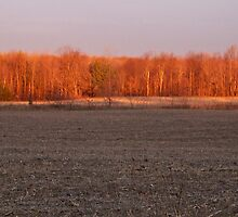 Sunrise on Old North Lake Road by MichiganGirl