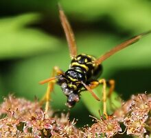 Wasp and Lunch by Gary Horner