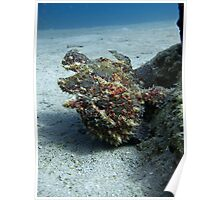 Ugly Frogfish Poster