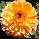 Orange Ball by NancyC