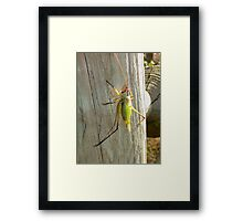 Ready To Escape Framed Print
