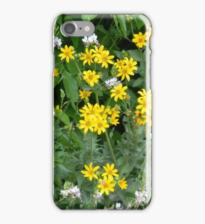 Daisies and Scarlet Guara iPhone Case/Skin