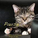 Pause by Alice Kahn
