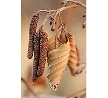 Dried Leaf Photographic Print