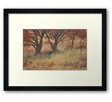 TREES ON A HILL Framed Print