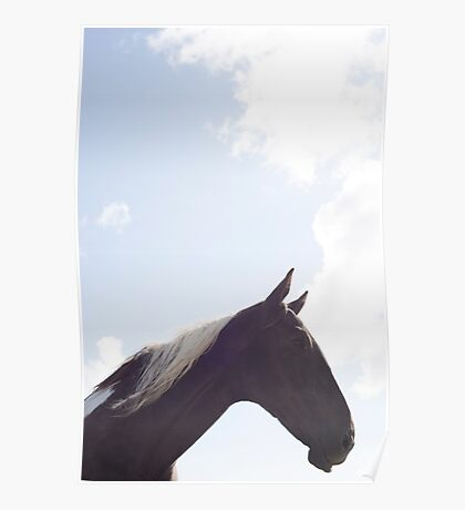 single horse in a field with bright blue skies Poster