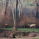 Morning Jungle Scene with Sambar Deer by Nickolay Stanev