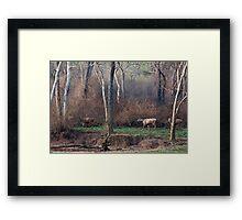 Morning Jungle Scene with Sambar Deer Framed Print