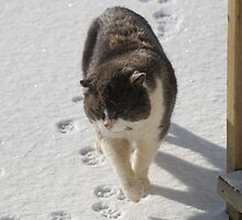 Old Cat by terrebo