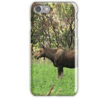 Moose Eating Dinner iPhone Case/Skin