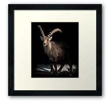 Big Horn (Ibex) Framed Print