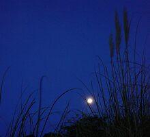 Toitoi Moonlight by Sue Cotton