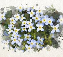 Bluet Flowers Watercolor Art by Christina Rollo